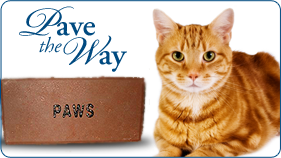 PAVE THE WAY PROJECT